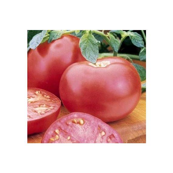Tomate Pink Girl (rose)
