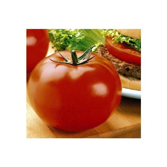 Tomate 'Big Beef'