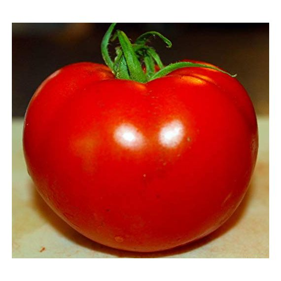 Tomate 'CELEBRITY'